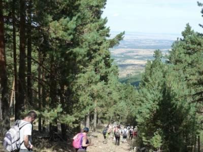 Senderismo entre pinares - senderos viajes y turismo; ruta de senderismo